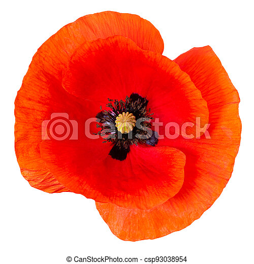 poppy flower isolated on white background. Top view. - csp93038954