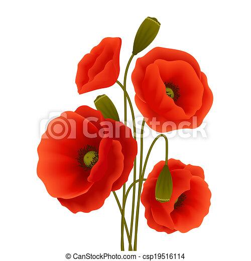 Poppy flower poster - csp19516114