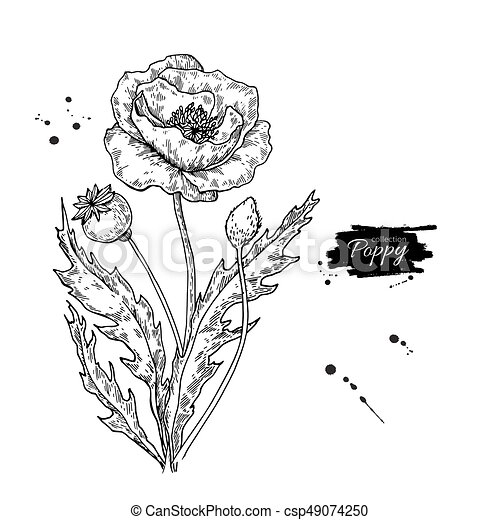 Poppy flower vector drawing set isolated wild plant and leaves poppy flower vector drawing set isolated wild plant and leaves mightylinksfo