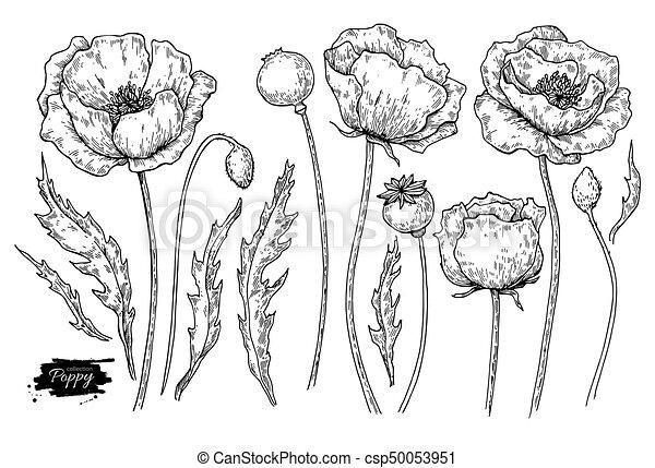 Poppy flower vector drawing set isolated wild plant and leaves poppy flower vector drawing set isolated wild plant and leaves herbal engraved style illustration mightylinksfo