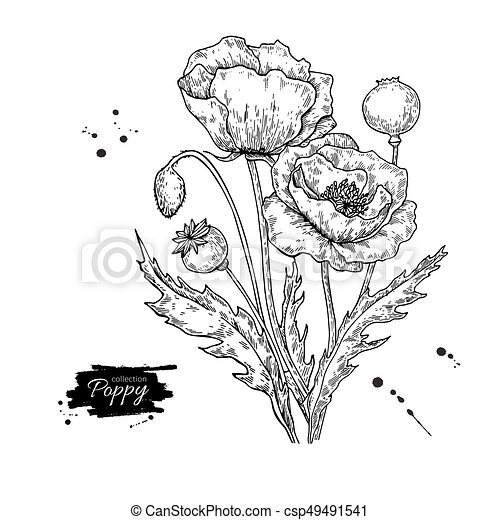 Poppy flower vector drawing set isolated wild plant and eps poppy flower vector drawing set isolated wild plant and leaves mightylinksfo Choice Image