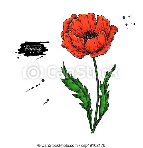 Poppy flower vector drawing set isolated wild plant and vectors poppy flower vector drawing set isolated wild plant and leaves in bouquet herbal artistic style mightylinksfo Choice Image
