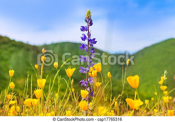 Poppy flowers yellow poppies in western california fields usa poppy flowers yellow poppies in western california csp17765316 mightylinksfo
