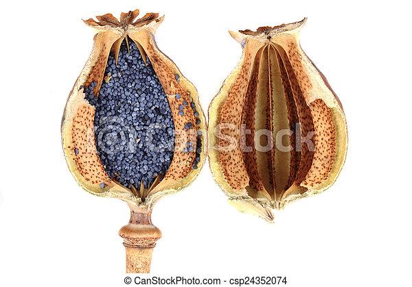 poppy seeds - csp24352074