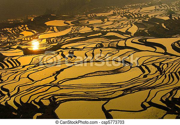 porcellana, terrazzi, yuanyang, yunnan, riso - csp5773703