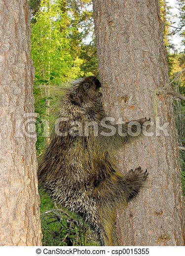 Porcupine - csp0015355
