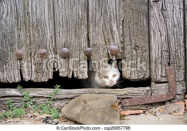 porta, legno, gatto, vecchio, attraverso, ferito, buco - csp26857798