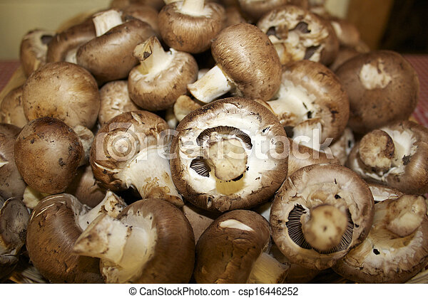 Portabello Mushrooms - csp16446252