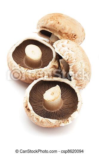 Portabello mushrooms - csp8620094