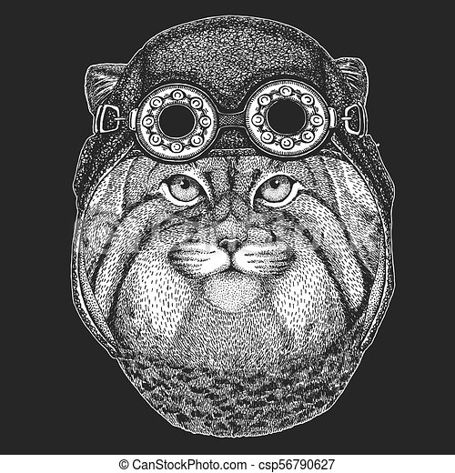 porter, écusson, manul, emblème, main, motard, chat, tatouage, animal, image, sauvage, dessiné, motocyclette, pièce, helmet., aviateur, logo, frais - csp56790627
