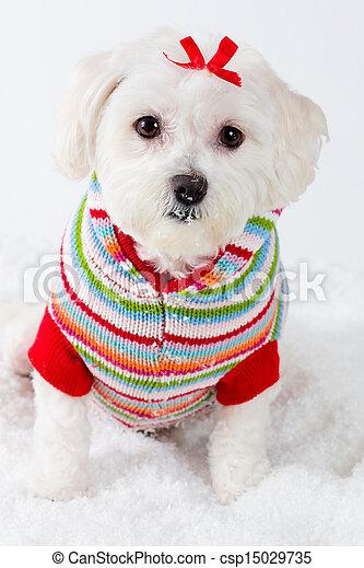 porter, hiver, chien, rayé, chiot, cavalier - csp15029735