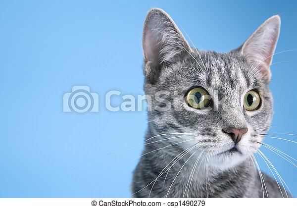 portrait, mignon, cat., gris - csp1490279