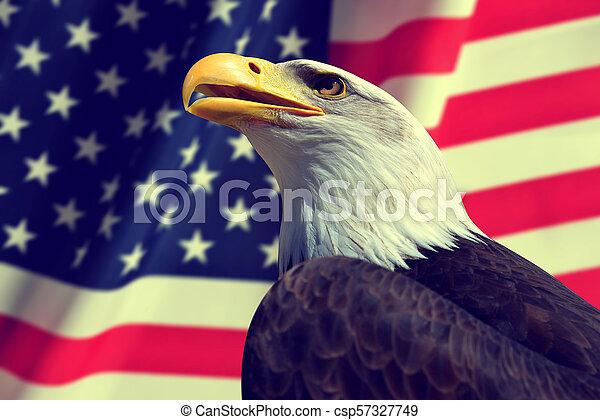 Portrait of a Bald Eagle. - csp57327749