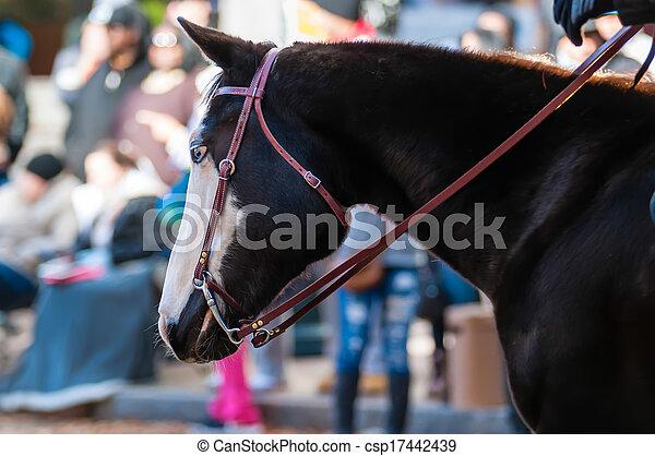 portrait of a beautiful horse - csp17442439