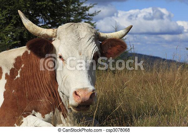 Portrait of a cow - csp3078068