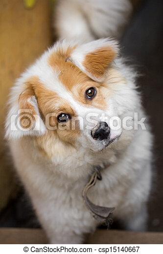 portrait of a dog - csp15140667