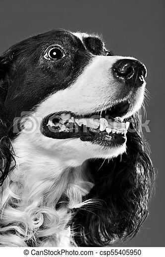 portrait of a dog - csp55405950