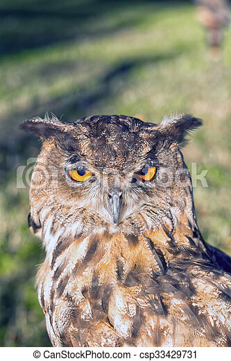 Portrait of a euroasian eagle owl - csp33429731