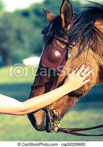 Portrait of a horse face - csp52206600
