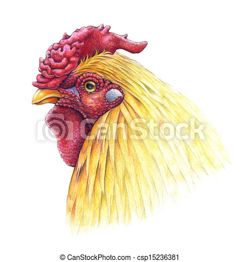 Portrait of a rooster,...