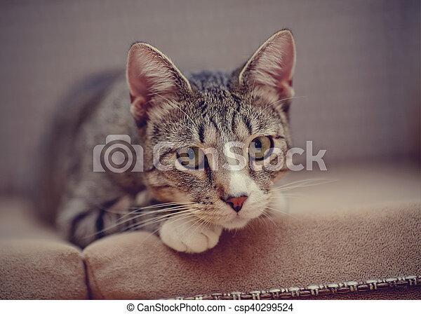 Portrait of a sad thoughtful striped cat. - csp40299524