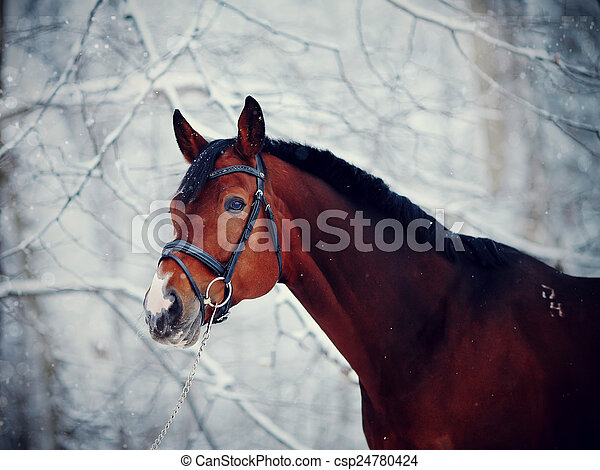 Portrait of a sports horse in the winter. - csp24780424