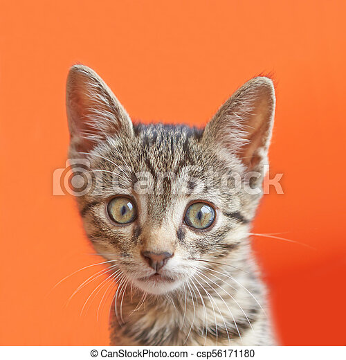 Portrait of a surprised cat - csp56171180