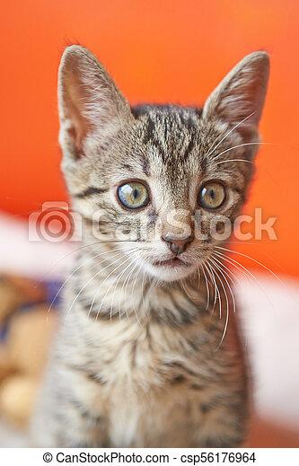 Portrait of a surprised cat - csp56176964