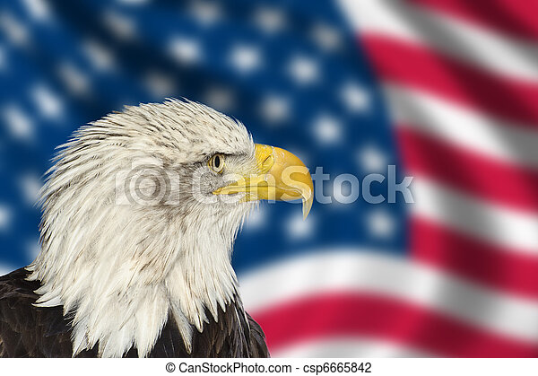 Portrait of American bal eagle against USA flag stars and stripes - csp6665842