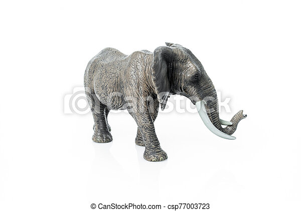 Portrait of an elephant isolated on the white background. - csp77003723
