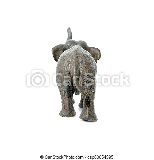 Portrait of an elephant isolated on the white background. - csp80054395
