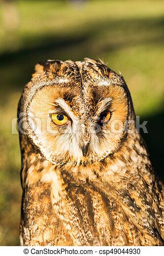 Portrait of Eagle owl (Bubo bubo) - csp49044930