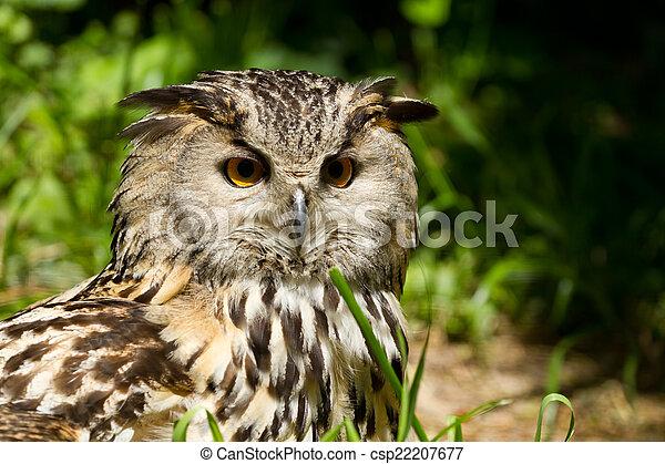 Portrait of eagle-owl - csp22207677