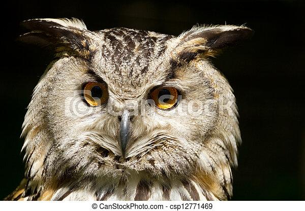 Portrait of eagle-owl - csp12771469