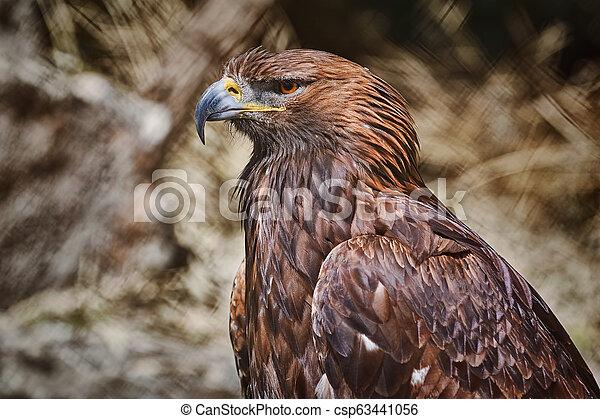Portrait of Eagle - csp63441056