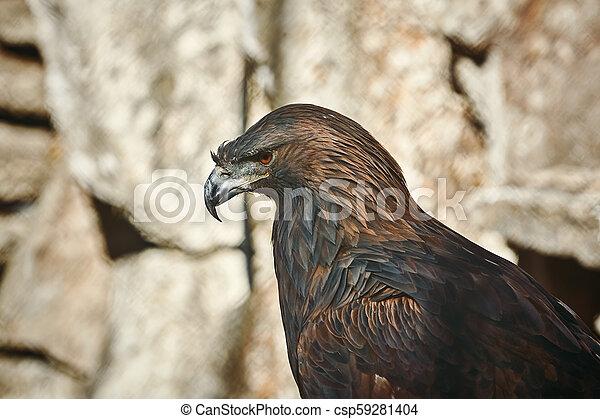 Portrait of Eagle - csp59281404