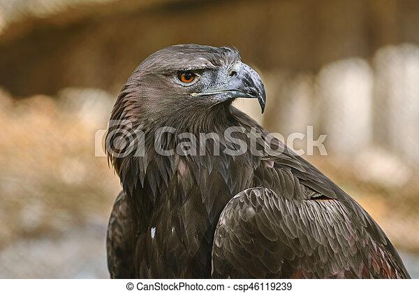 Portrait of Eagle - csp46119239