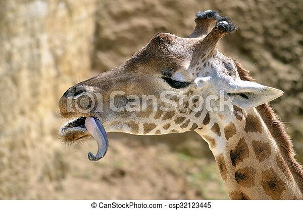 Portrait of giraffe - csp32123445