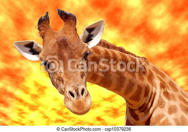 Portrait of giraffe - csp10379236
