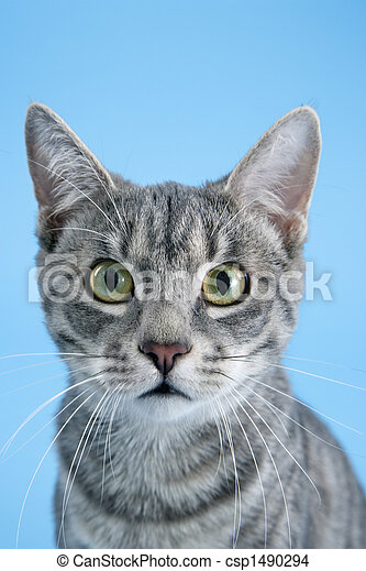 Portrait of gray striped cat. - csp1490294