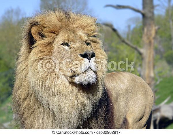 Portrait of lion - csp32962917