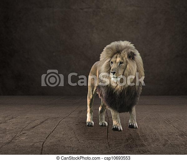 Portrait Of Lion - csp10693553
