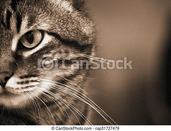 Portrait of tabby cat - csp31727479
