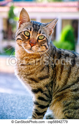 Portrait of tabby cat - csp56942779