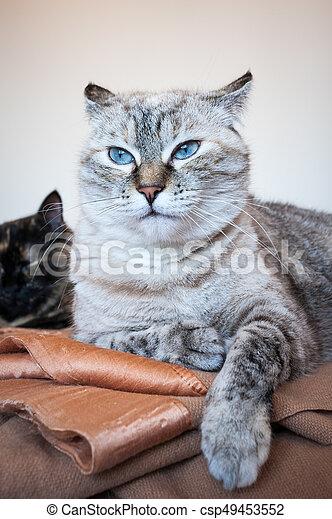 Portrait of tabby cat. - csp49453552