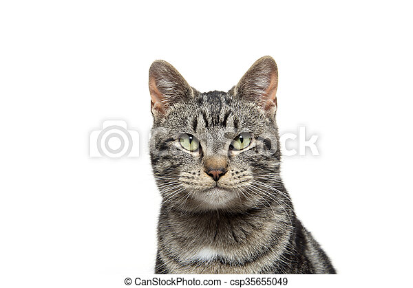 portrait of tabby cat - csp35655049