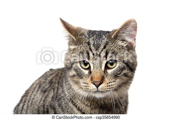 Portrait of tabby cat - csp35654990
