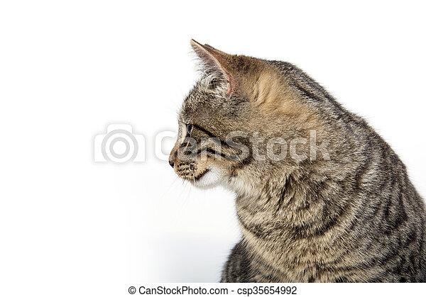 Portrait of tabby cat - csp35654992