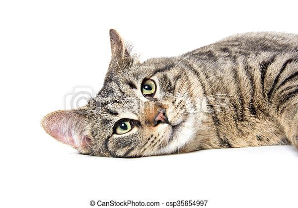 Portrait of tabby cat - csp35654997