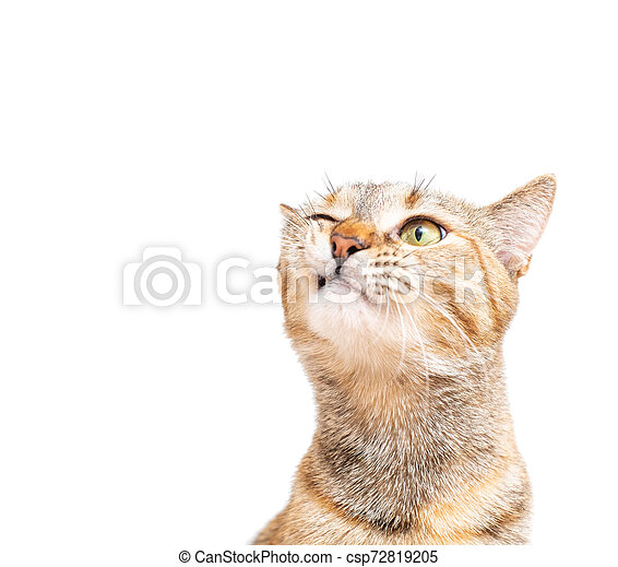 Portrait of tabby cat with funny expression. - csp72819205